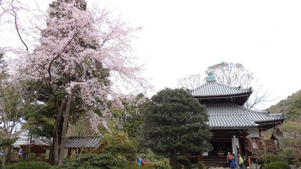 安楽寺 2016春