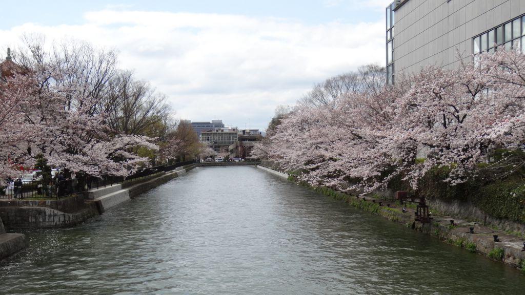 平安神宮 桜2016