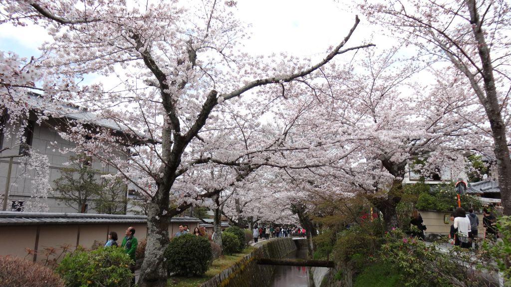 哲学の道 桜 2016