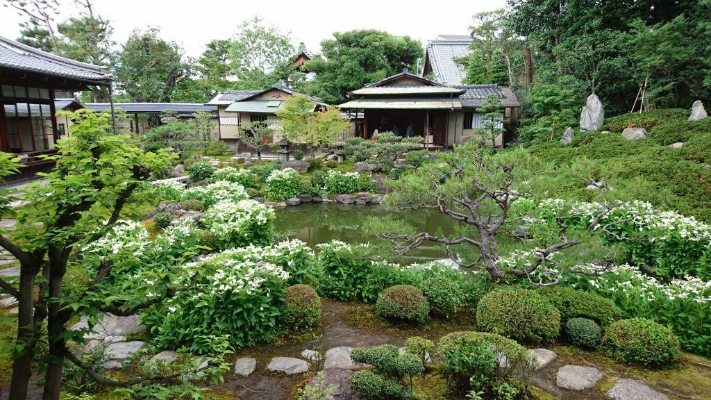 建仁寺塔頭 両足院 半夏生の庭園特別公開