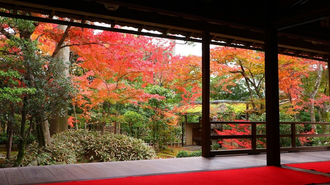 京都の紅葉 2016まとめ+御朱印