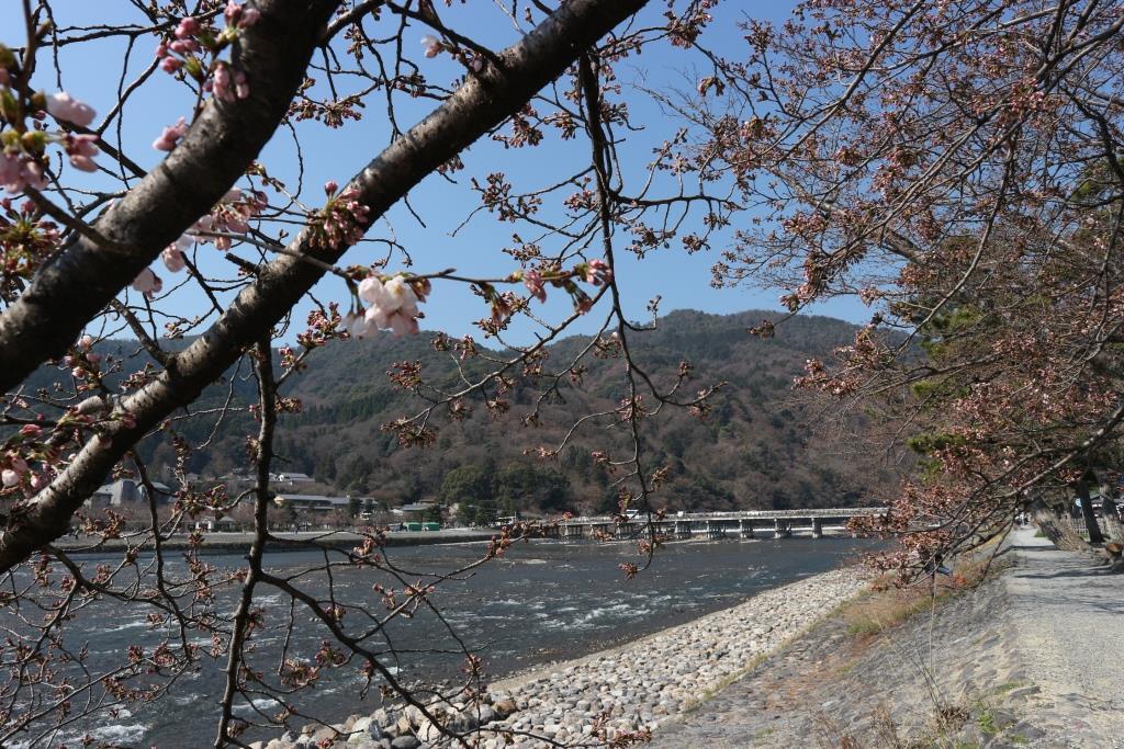 嵐山渡月橋 桜 2017年