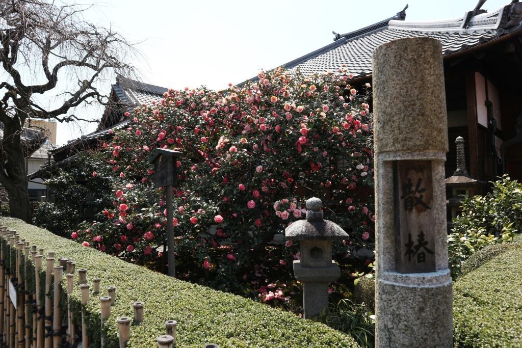 椿寺地蔵院