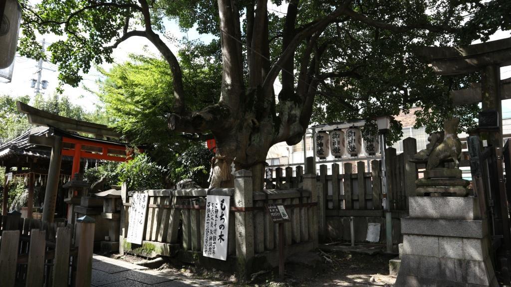 満足稲荷神社 御神木 もちの木