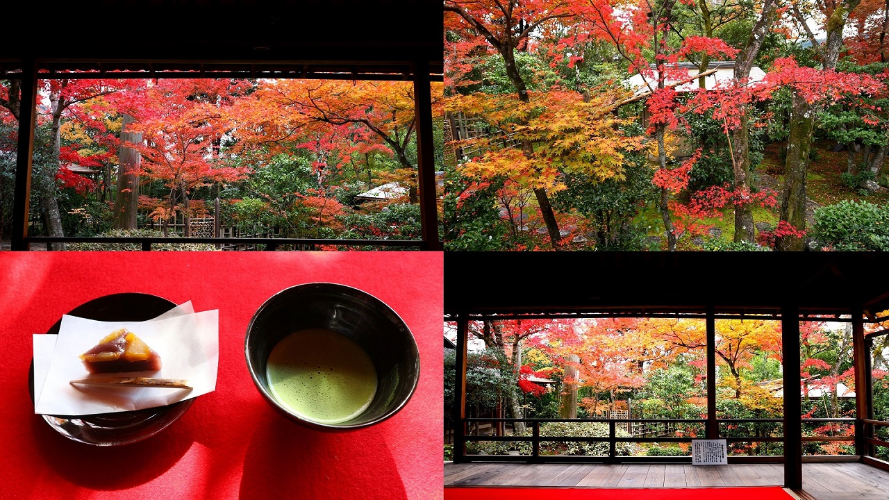 紅葉の美しさ京都No.1~妙心寺大法院