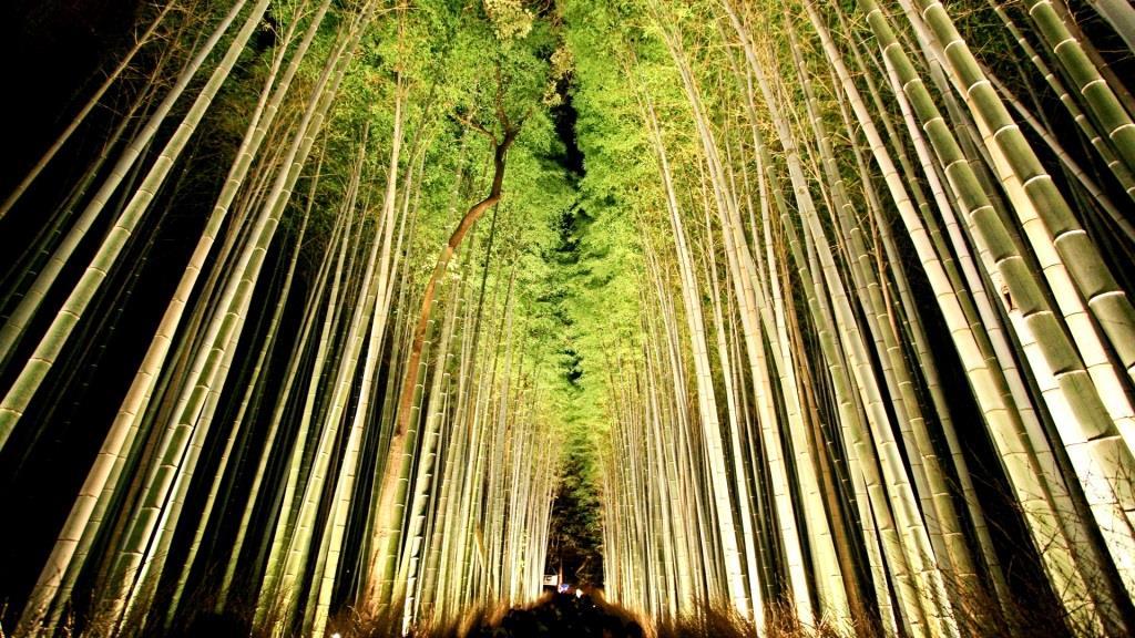 竹林の小径 イルミネーション