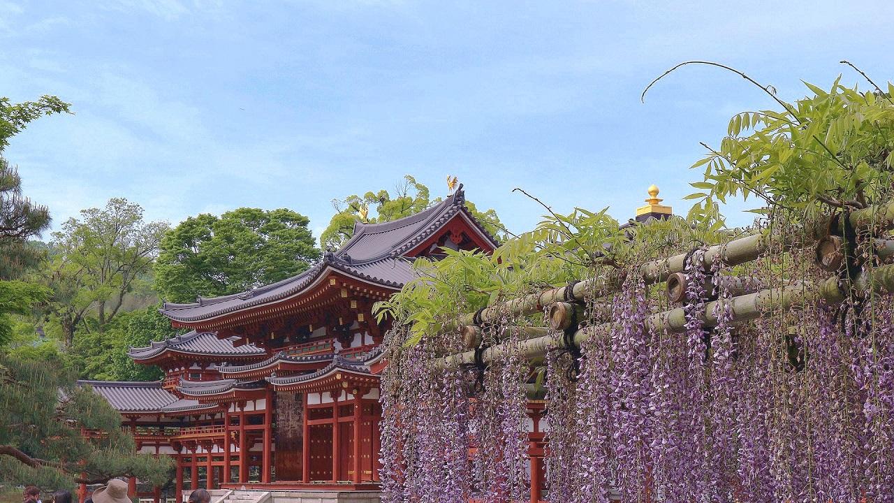 宇治平等院の藤の花&抹茶グルメ