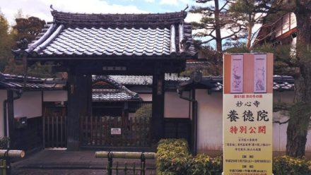 妙心寺塔頭 養徳院