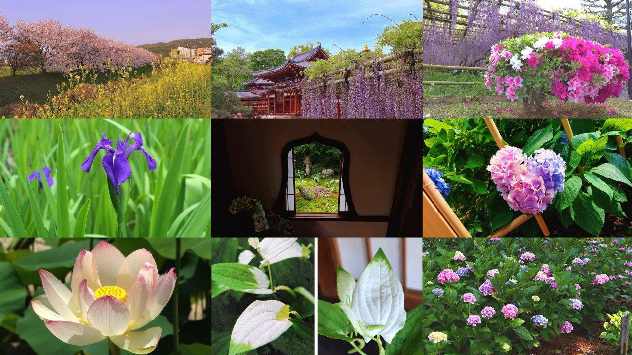 京都のおすすめインスタ映え花の名所+御朱印~藤の花・半夏生・ハートあじさい…